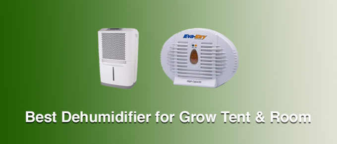 Best Dehumidifiers for Grow Tent