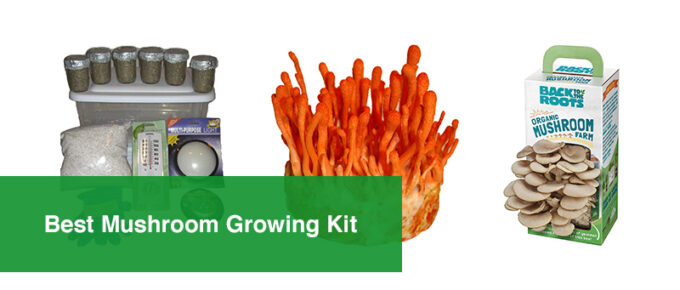 Best Mushroom Growing Kit