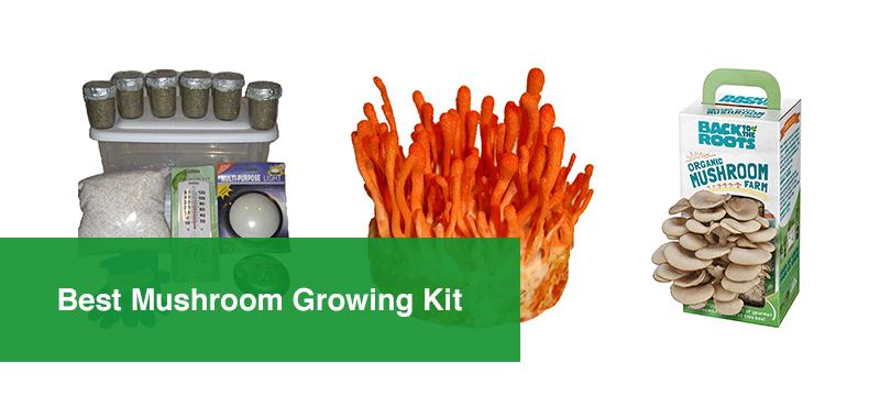 Best Mushroom Growing Kit