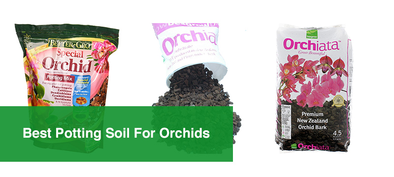 Best Potting Soil For Orchids