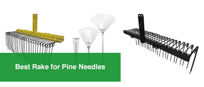 Best Rake for Pine Needles