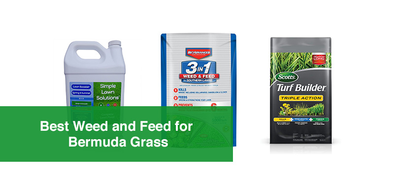 Best Weed and Feed for Bermuda Grass