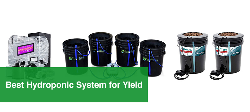Best Hydroponic System for Yield