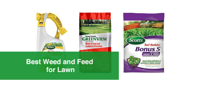 Best Weed and Feed for Lawn