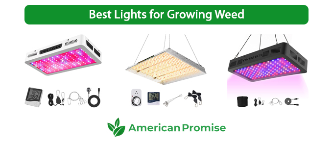 Best Lights for Growing Weed