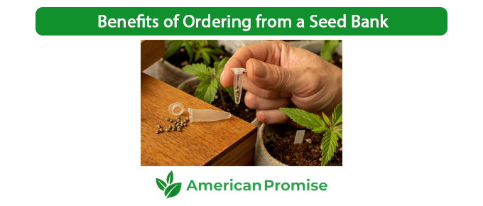 Benefits of Ordering from a Seed Bank