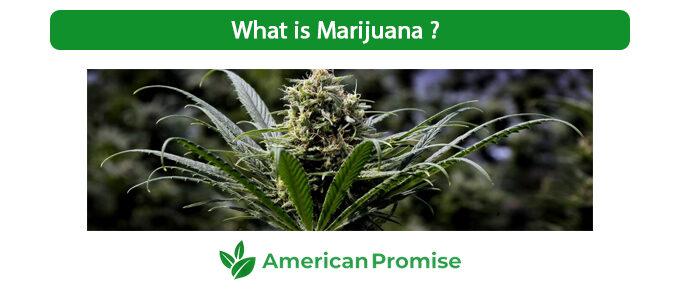 What is Marijuana