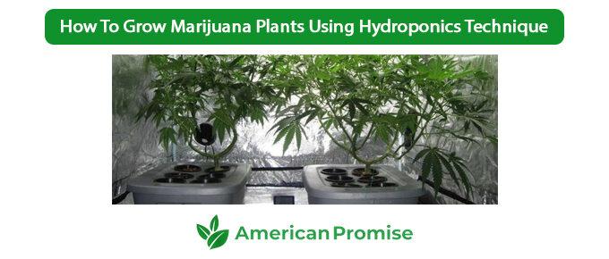 How To Grow Marijuana Plants Using Hydroponics Technique