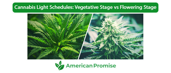 Cannabis Light Schedules Vegetative Stage vs Flowering Stage