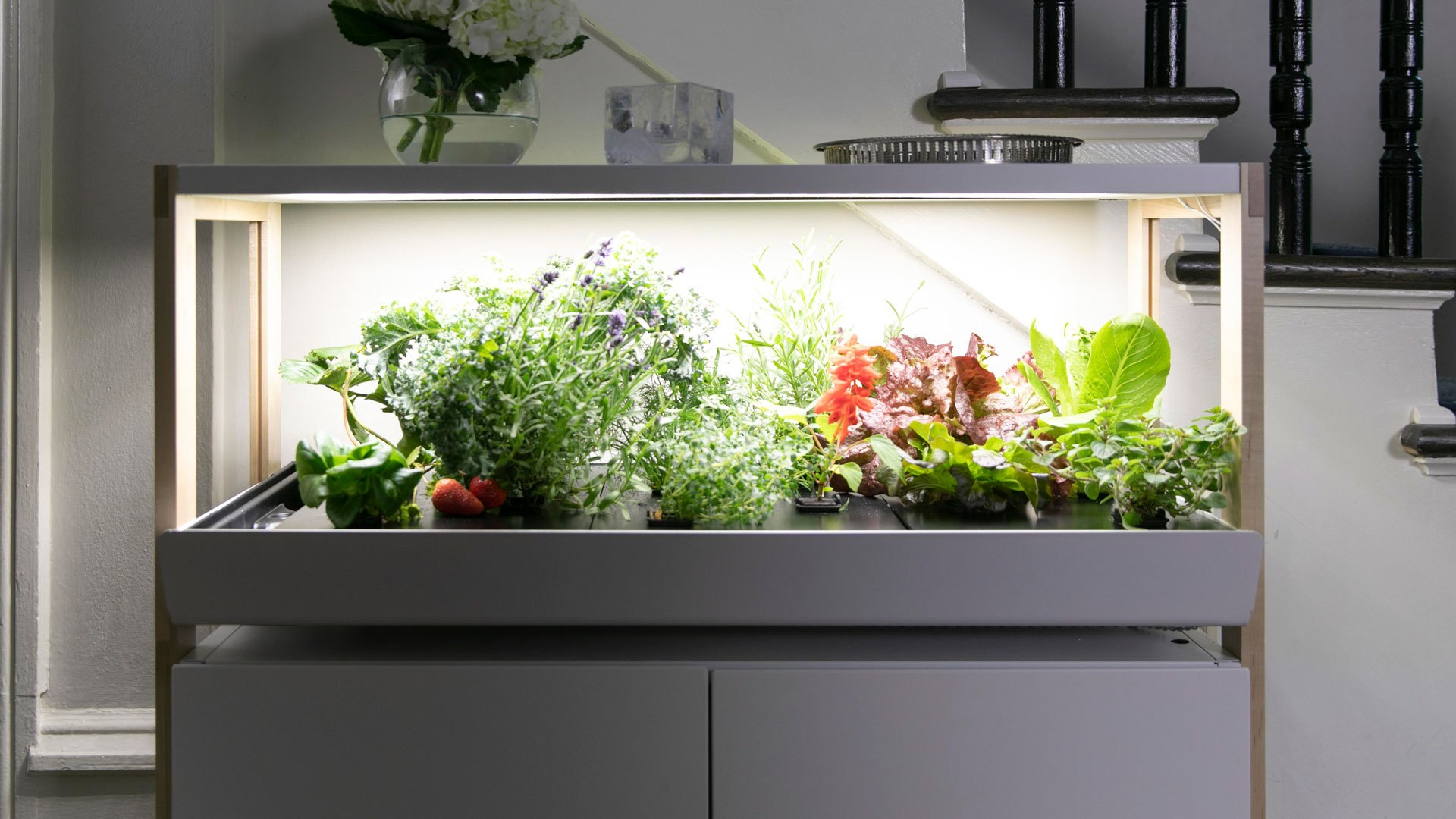 Factors to consider while beginning with Indoor Gardening