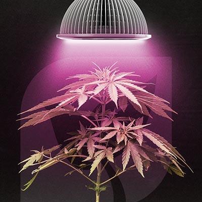 High-Intensity Discharge (HID) Grow Lights