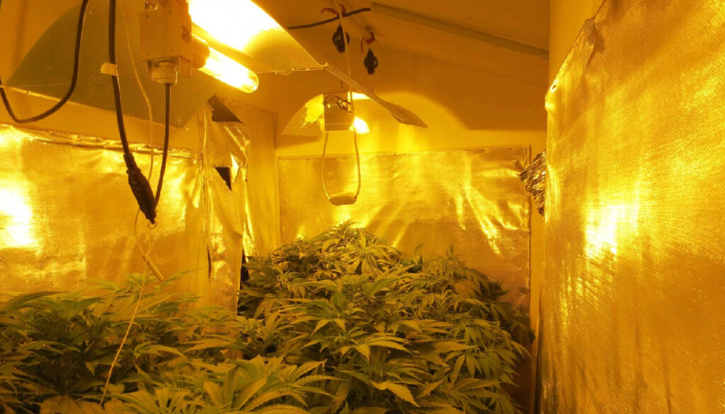 High-intensity Discharge Grow Lights