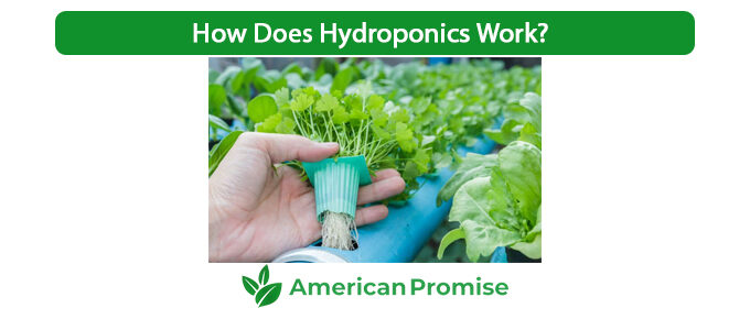 How Does Hydroponics Work