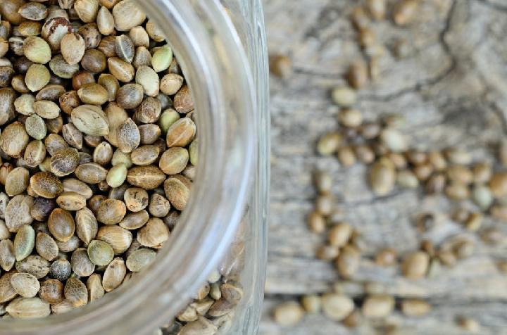 How long will the Marijuana seeds last in storage