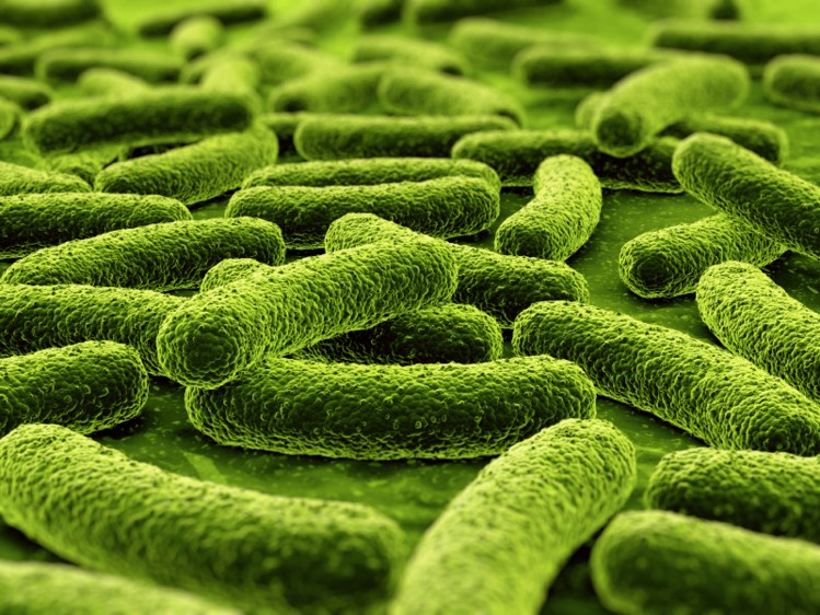Instil beneficial bacteria