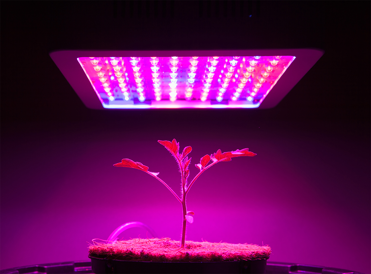 Switch to brighter intensity grow lights