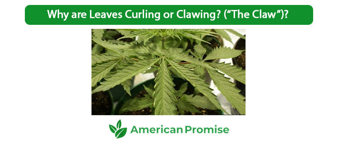 """Why are Leaves Curling or Clawing (""""The Claw"""")"""