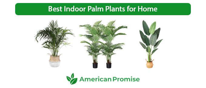 Best Indoor Palm Plants for Home