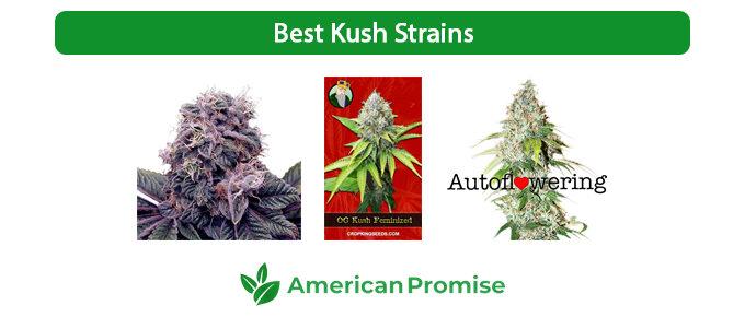 Best Kush Strains