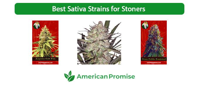 Best Sativa Strains for Stoners