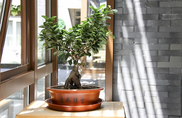Caring for Bonsai Trees Indoors