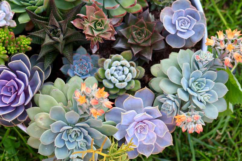 Factors to consider for getting the indoor succulents to flower