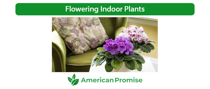 Flowering Indoor Plants