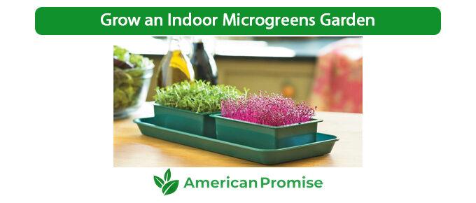 Grow an Indoor Microgreens Garden