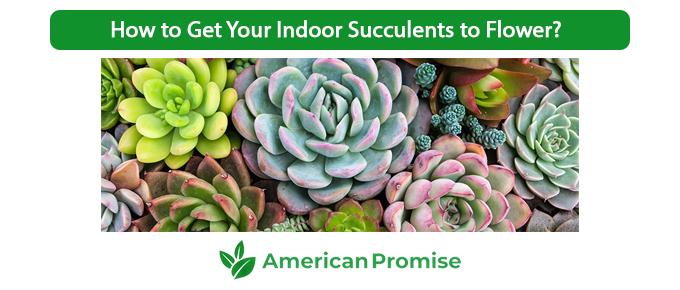 How to Get Your Indoor Succulents to Flower?