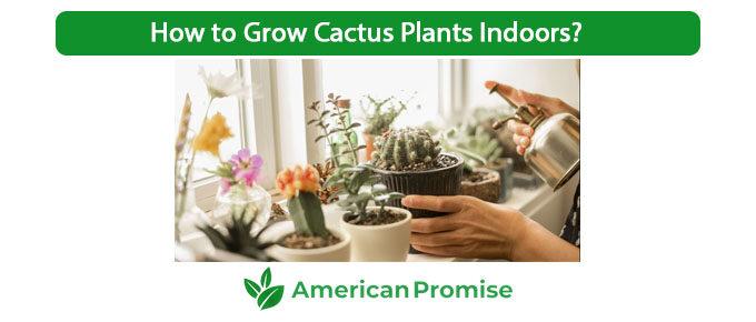 How to Grow Cactus Plants Indoors?