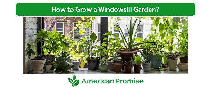 How to Grow a Windowsill Garden?