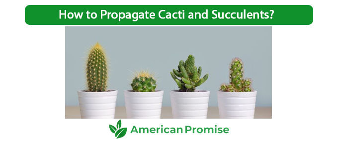 How to Propagate Cacti and Succulents