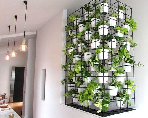 Make a Vertical Garden Indoors