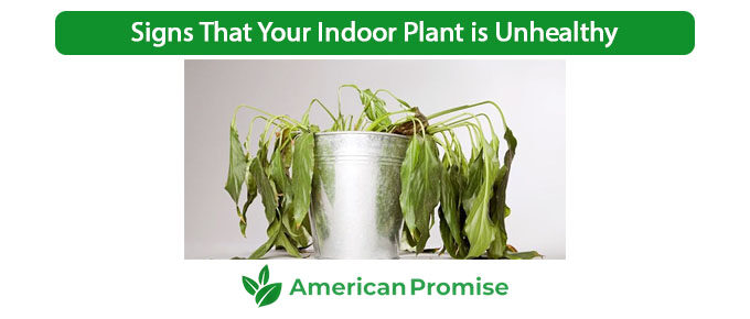 Signs That Your Indoor Plant is Unhealthy