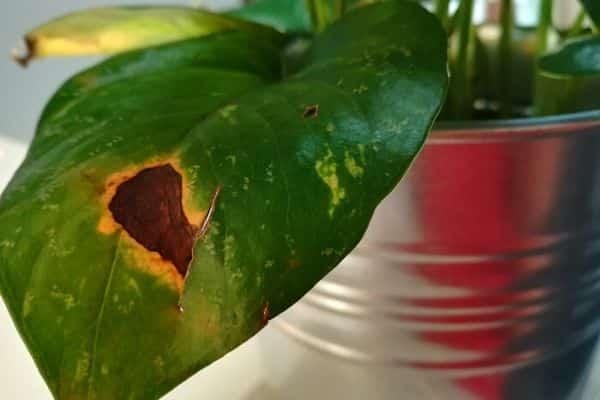 Spots on Leaves