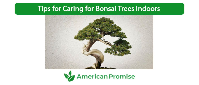Tips for Caring for Bonsai Trees Indoors