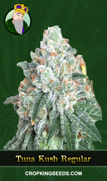 Tuna Kush Regular Marijuana Seeds