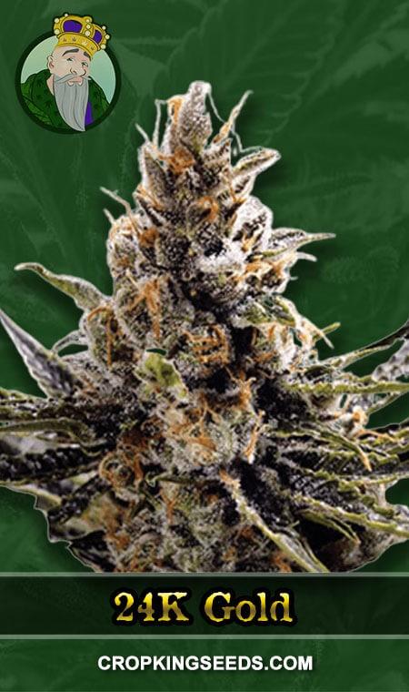 24K Gold Regular Marijuana Seeds