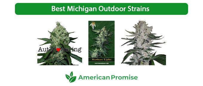 Best Michigan Outdoor Strains