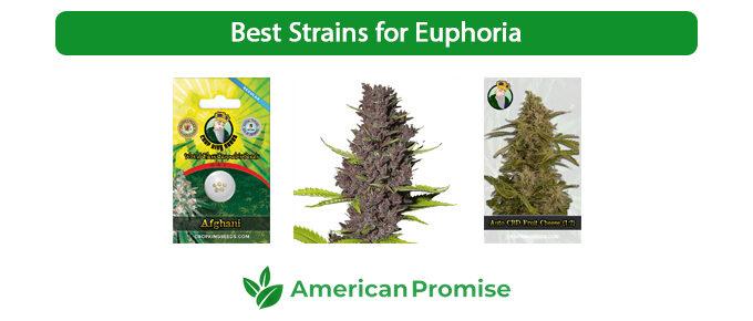 Best Strains for Euphoria