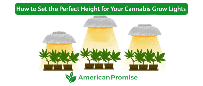 How to Set the Perfect Height for Your Cannabis Grow Lights